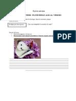 fluturele_alb_al_verzei_metoda_cubului.doc