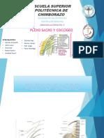 PLEXO SACRO COCCIGEO (1)