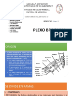 PLEXO-BRAQUI2