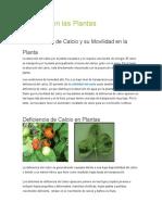 vegetal expo.docx
