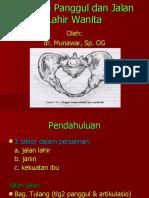 Anatomi Jalan Lahir (Dr. Munawar)