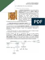Actividad N° 3 Lengua y literatura 4to Ciclo Orientado.docx