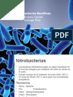 Bacterias Benéficas-3 MVE C- Quiroga Ruiz
