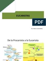 3- Células Eucariotas