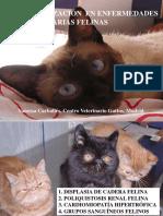 actualizacion_enfermedades_herediarias_felinas.pdf