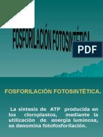 Tema 12. Fosforilación fotosintética
