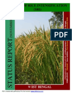 System of Rice Intensification, West Bengal India