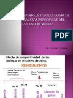 II Manejo de Malezas  del cultivo de Arroz - Jairo (1).pdf