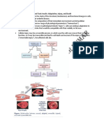 Cellular Responses to Stress and Toxic Insults.pdf.pdf