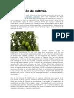 clasificacion de los cultivos