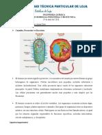 Eucariota y Procariota