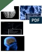 Estructuras del sistema nervioso.docx