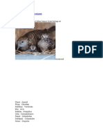 klasifikasi burung perkutut