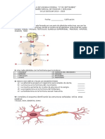 EL SISTEMA ENDOCRINO esta formado por una serie de glándulas endocrinas