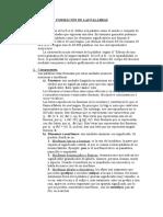 LA PALABRA. FORMACIÓN DE PALABRAS.doc