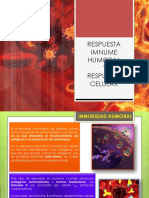 respuestaimnumehumoralycelular