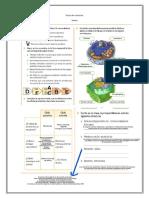 Guía de ciencias 6-2 (1)