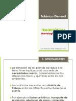 7 - Morfología del Tallo  Arias 2013
