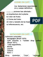 MG CAFE 3
