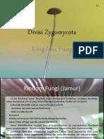 Divisi Zygomycota
