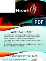 Report on the Heart