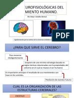 BASES NEUROFISIOLÓGICAS DEL MOVIMIENTO HUMANO