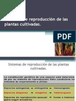 Clase 3 reproducción de las plantas