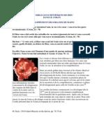 Les phases de développement des organes humains