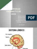 ssistema limbico 21 (1)