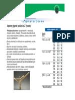 canon-arco-iris-268-en-bronce.pdf
