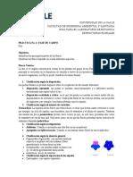 practica de laboratorio No. 4 FLOR (BOTÁNICA)