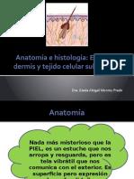 Piel Anatomía y Funciones