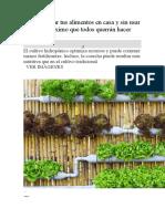 Cómo plantar tus alimentos en casa y sin usar tierra.docx
