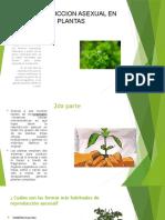Presentación de biologia JUAN DAVID PEÑUELA.pptx
