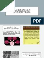 diapositivas sobre la aminopeptidasa