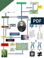 mapa mental sobre Mendel