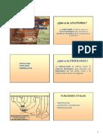01 - Presentacion, esqueleto y regiones.pdf