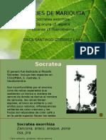 Especies  Mariquita.pptx