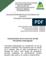 Drosophila melanogaster.pptx