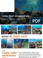 Coral Reef Extermination