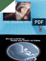 The Growing Fetus