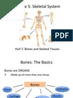 Module 5 - Skeletal System Student (3).pptx