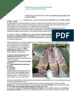 LasPlumasGuia.pdf
