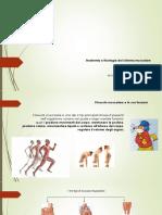 Anatomia e fisiologia del sistema muscolare