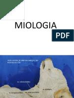 Miologia cão.pdf
