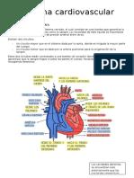 Generalidades del Sistema Cardiovascular