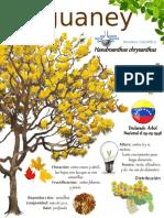 info araguaney.pptx