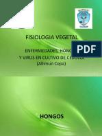 FISIOLOGIA VEGETAL ENFERMEDADES BACTERIAS Y VIRUS