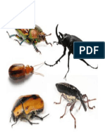 Beetles are the most common type of insect.docx