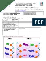 1. Taller ADN .pdf
